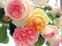 ★★La Vie en Rose ラヴィアンローズ (薔薇色の人生)ー ダンス、グルメ、芸術、スポーツ、旅行、親睦会、ー素敵に楽しみましょう