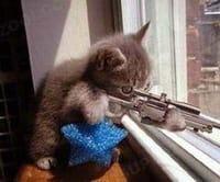boss猫
